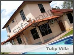 Tulip Villa